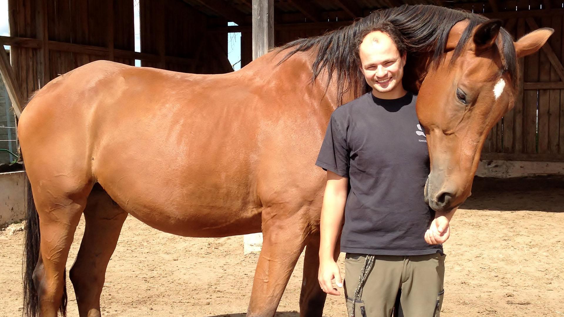 pferde aus dem tierschutz